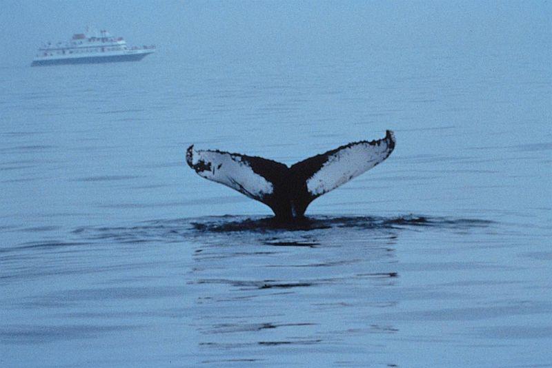 Virginia-beach-whale